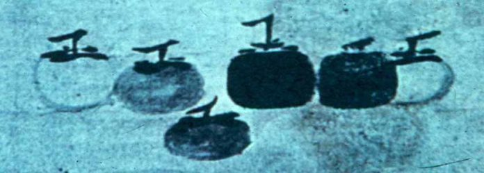 six persimmons in a stylized drawing
